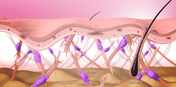 dạng phân tử collagen