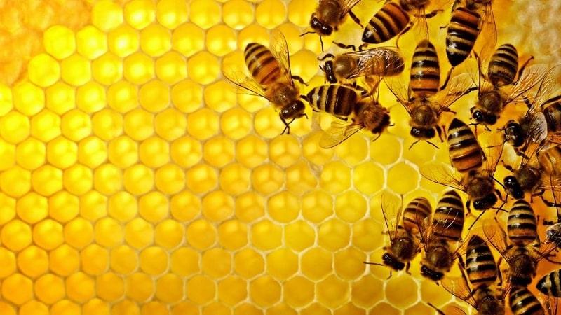 Thành phần keo ong đóng vai trò quan trọng trong sản phẩm